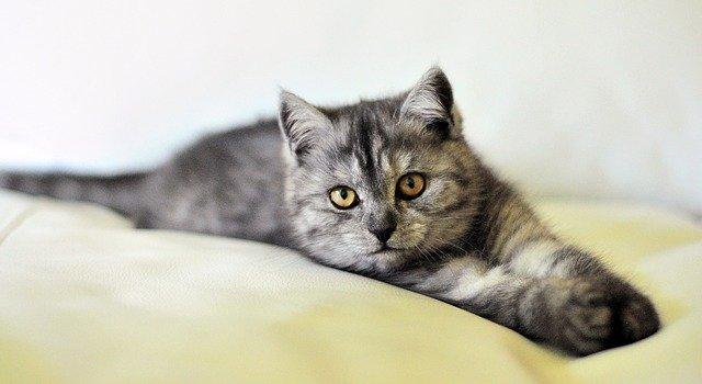 猫フリー素材.jpg