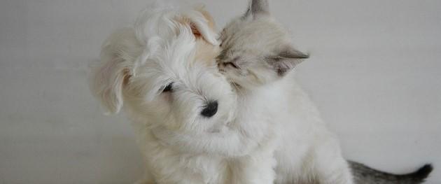 犬猫フリー素材6 (3).jpg