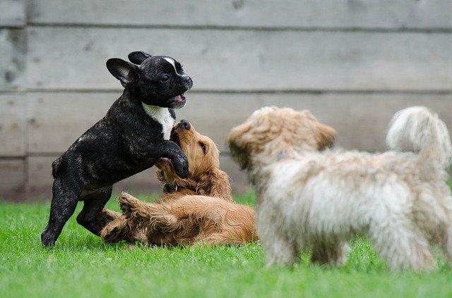 犬フリー素材7.jpg